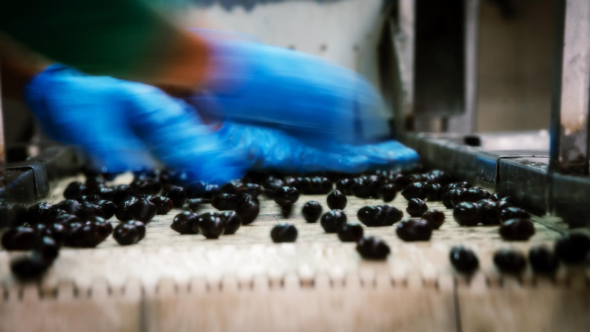 olives-btm-img